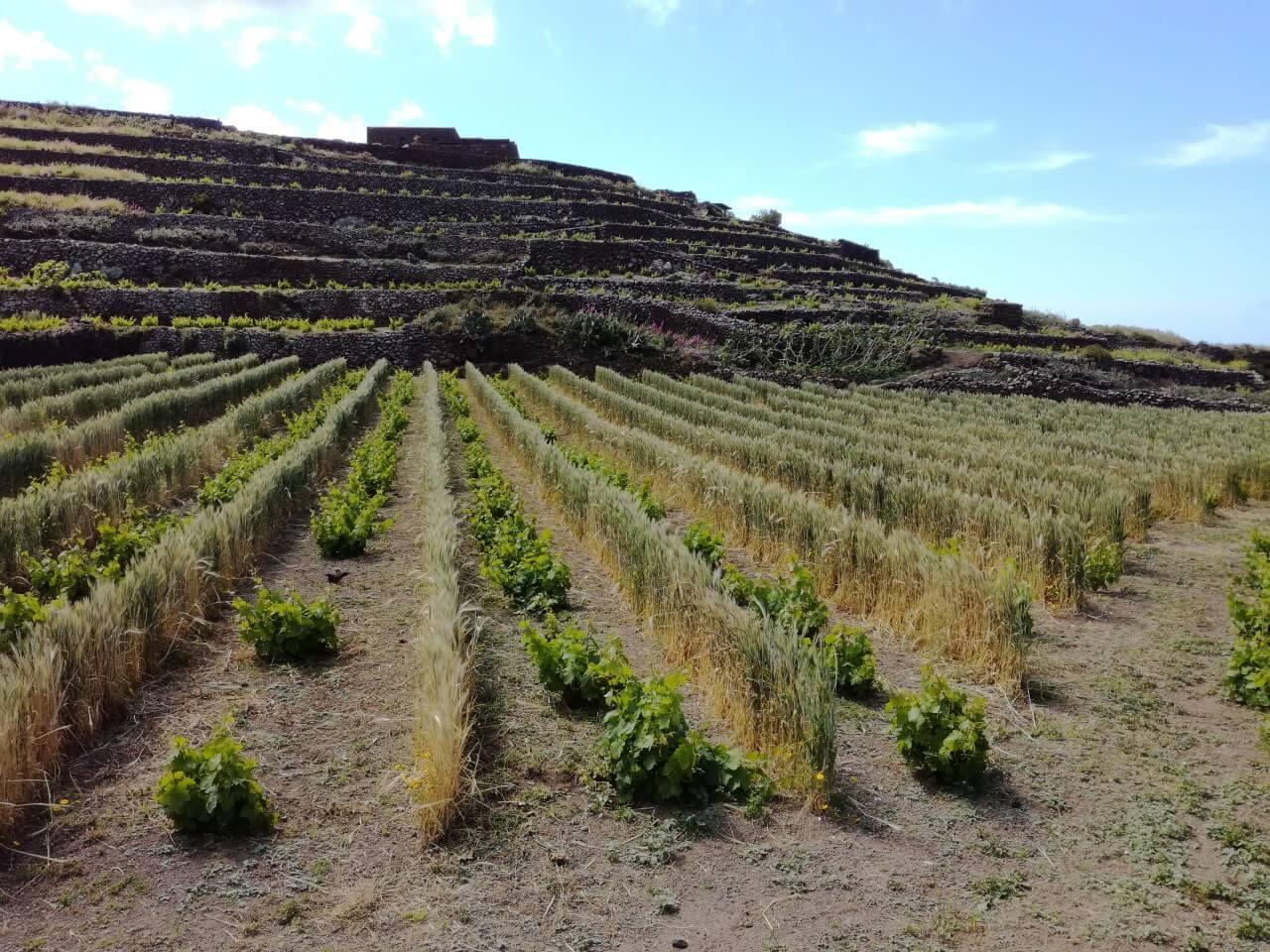 protezione vento solidea vini